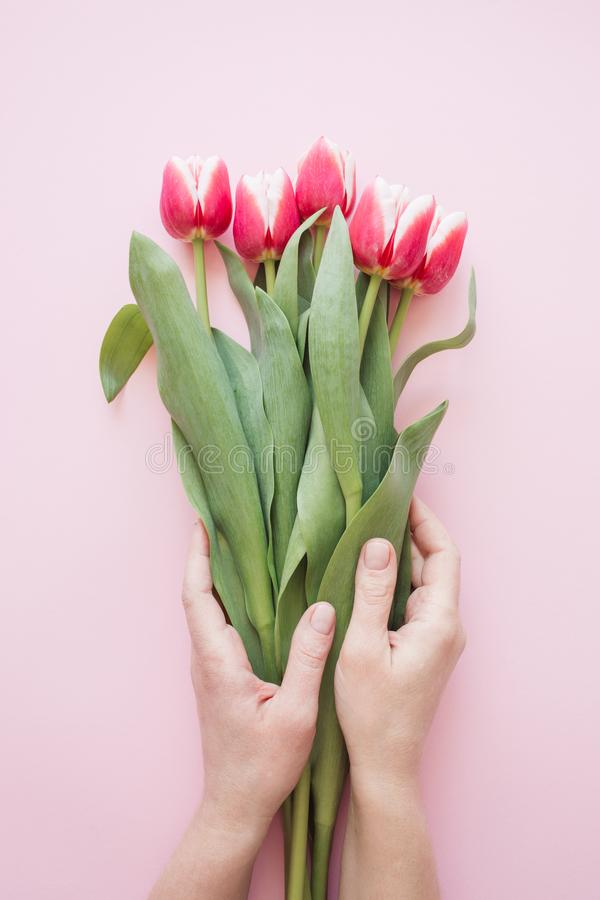 Woman`s hand holding tulips royalty free stock photography