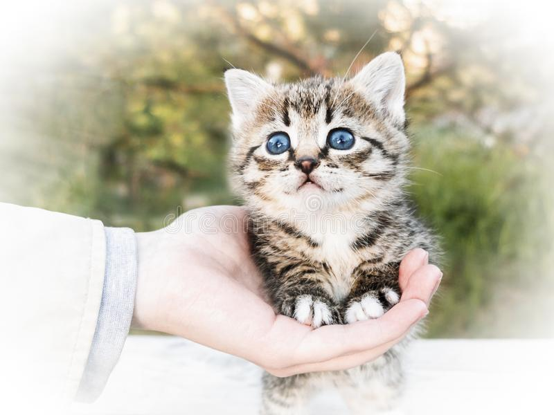 A woman`s hand holds for the paws of a small cute kitten standing on a table, outdoors stock photo