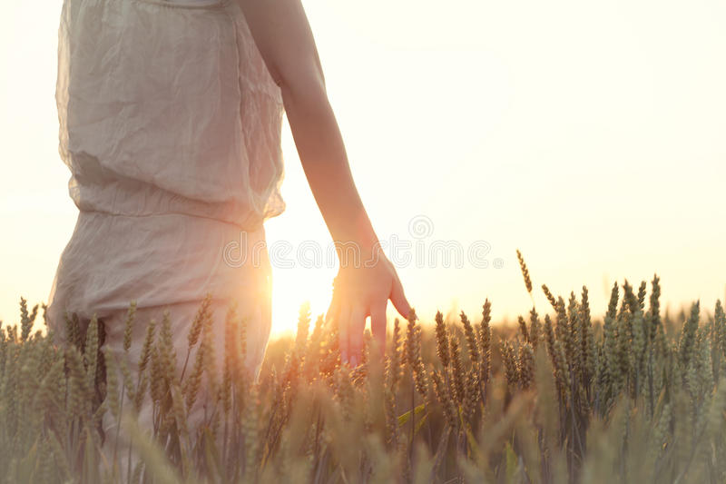 Woman`s hand touching wheat ears at sunset stock image