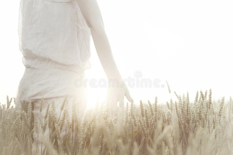 Woman`s hand touching wheat ears at sunset royalty free stock photography