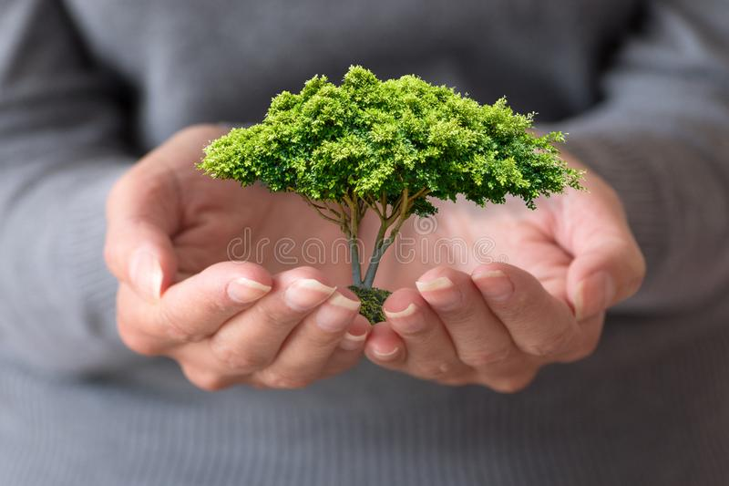 Woman`s hands is holding a small tree royalty free stock photos