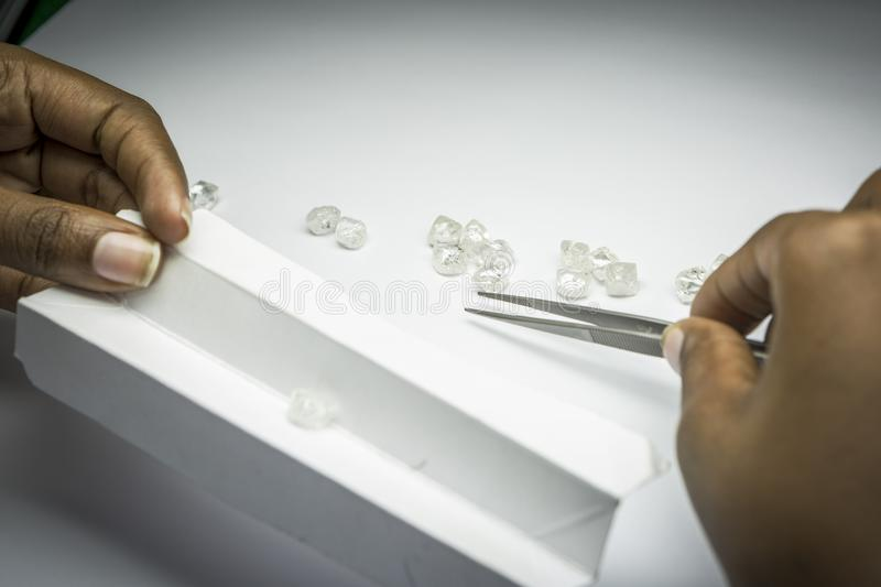 Woman`s hands inspecting rough diamonds with forceps. Diamonds royalty free stock photography