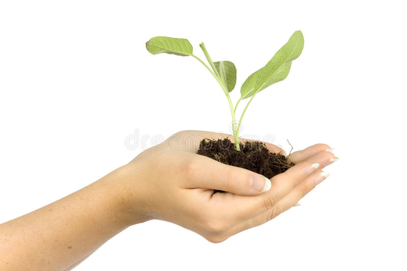 Woman's hands keep plant stock photography