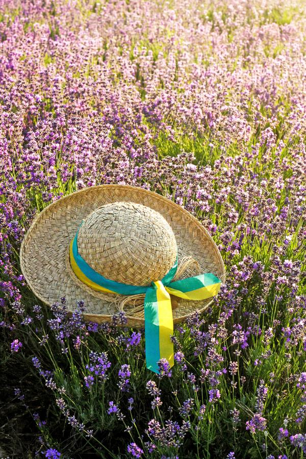Woman`s hat in lavender field in the sunset stock image