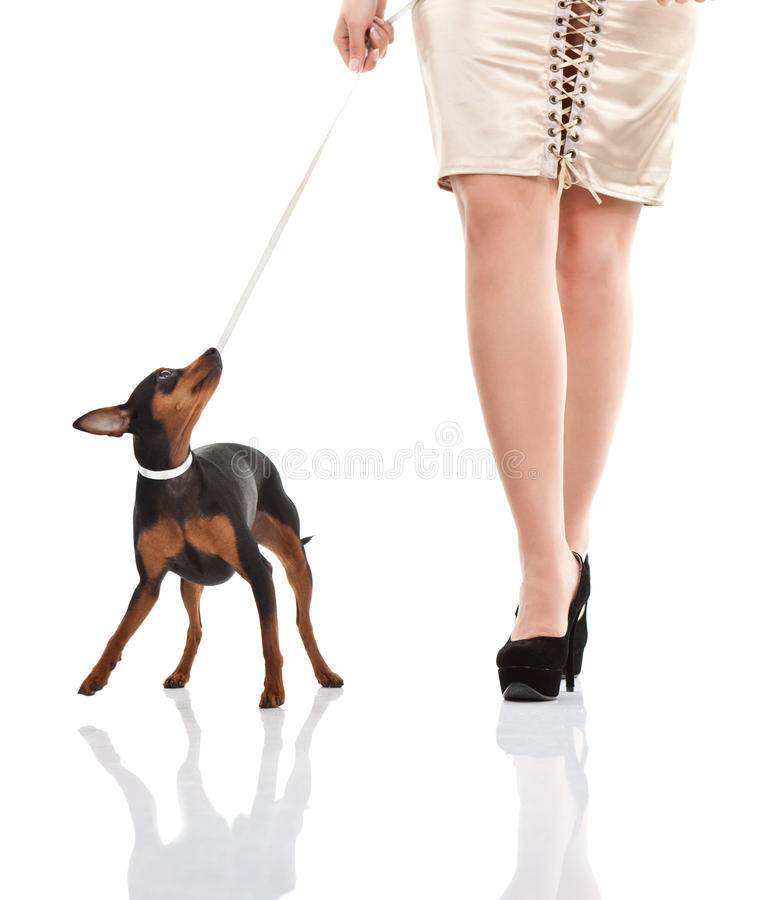 Woman's legs with and small dog stock images