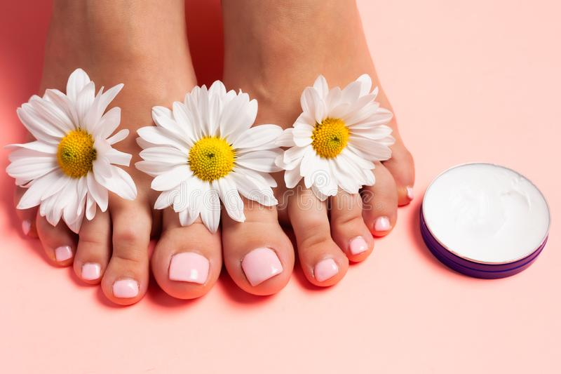 Woman`s perfect, groomed feet with of natural herbal cream. Love a feet. Beautiful flowers on pink background. Care about clean, stock images