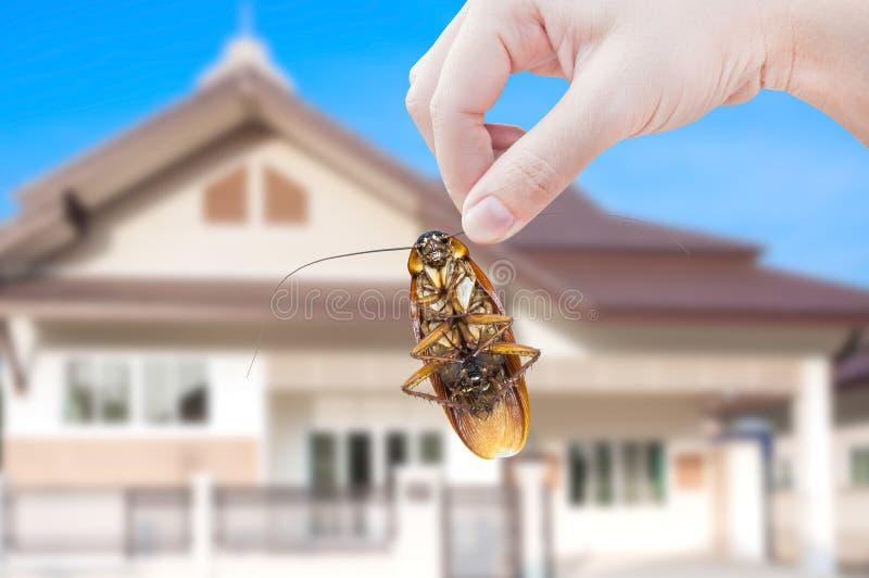 Woman& x27; s ręki mienia karakan na domowym tle obrazy royalty free