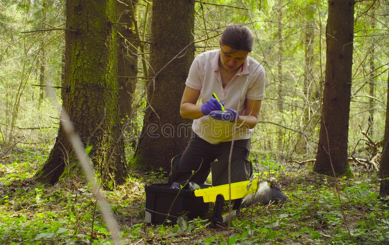 Scientist ecologist in the forest taking samples of moss. Woman scientist ecologist in the forest marking the petry dish with samples of the moss royalty free stock photos