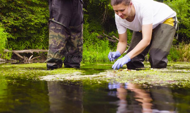 Woman scientist ecologist taking samples of duckweed stock photography