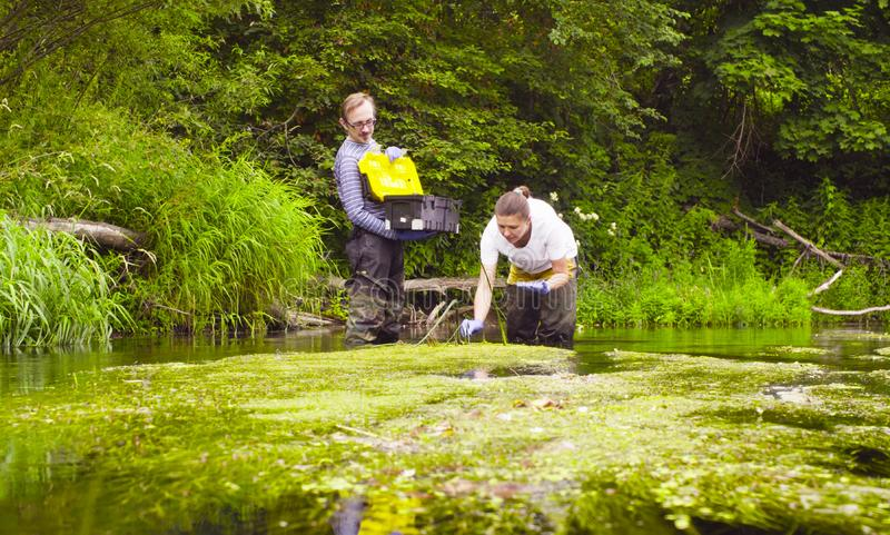 Woman scientist ecologist taking samples of duckweed royalty free stock image