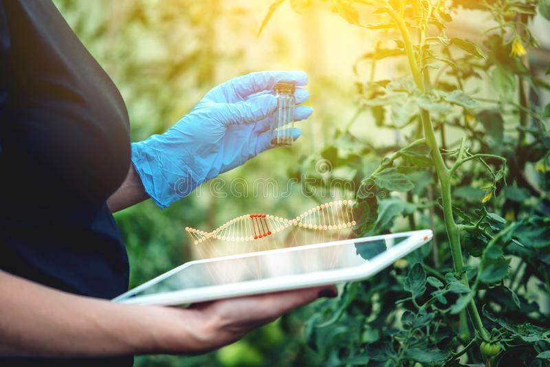 Woman scientist genetic engineer testing the plant for the presence of genetic modification. GMO products and organisms. Woman scientist genetic engineer with a vector illustration