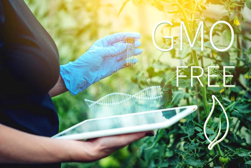 Woman scientist testing the plant for the presence of genetic modification. GMO-free products and organisms. Woman scientist genetic engineer with a tablet vector illustration