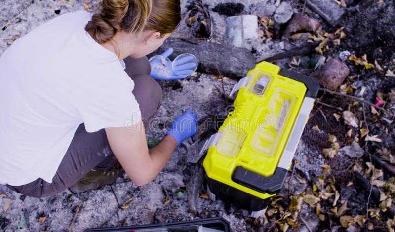 Woman scientists ecologists working on place where the forest burned down. Woman scientists ecologists working at the place where the forest burned down. She is royalty free stock image