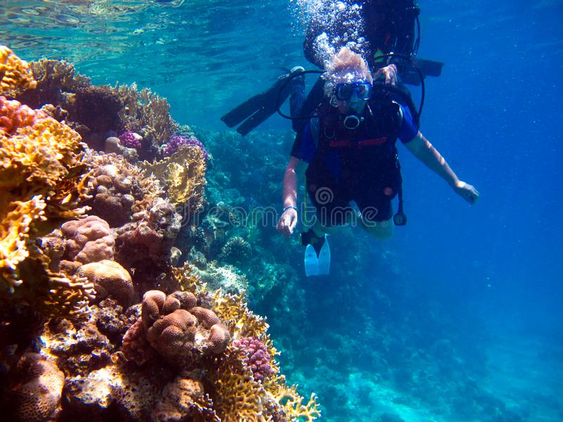 Woman scuba diver and beautiful colorful coral reef underwater.  royalty free stock image