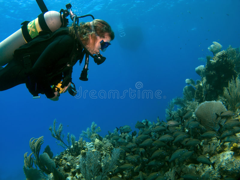 Woman Scuba Diver looking at A School of Fish. On a Cayman Island Reef with Boat in background royalty free stock photography
