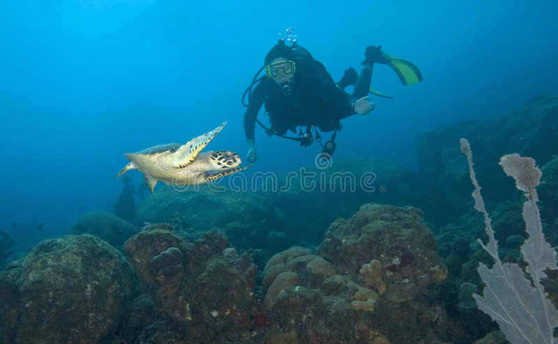 Woman scuba diver with sea turtle, St. Lucia royalty free stock image