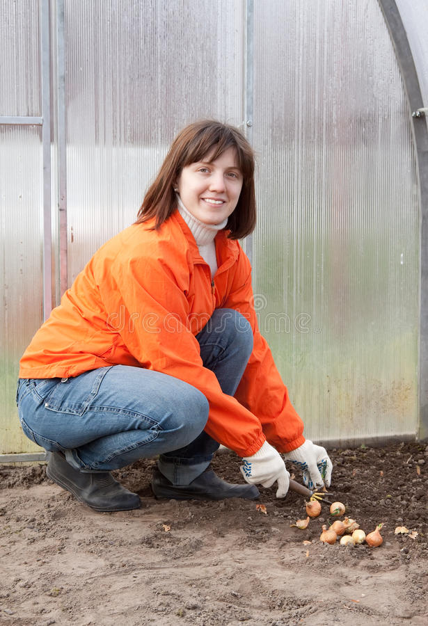 Woman Sets Onion In Soil Stock Photos