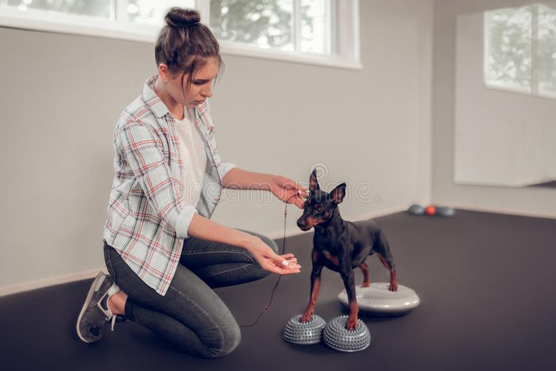 Dark-haired woman training her black dog showing him piece of bacon royalty free stock photo