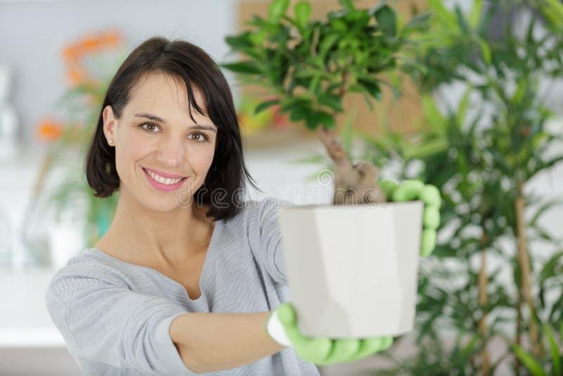 Woman showing bonsai royalty free stock image