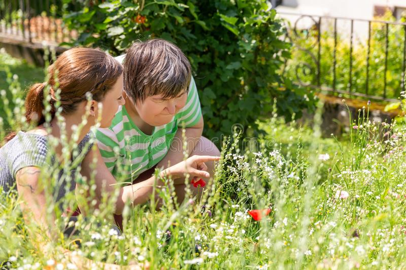 Woman is showing an mental disabled woman a flower. Woman is showing an mental disabled women a flower in a flower meadow stock photography