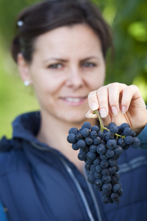Download Woman showing red grape stock image. Image of grapepicker - 26778789