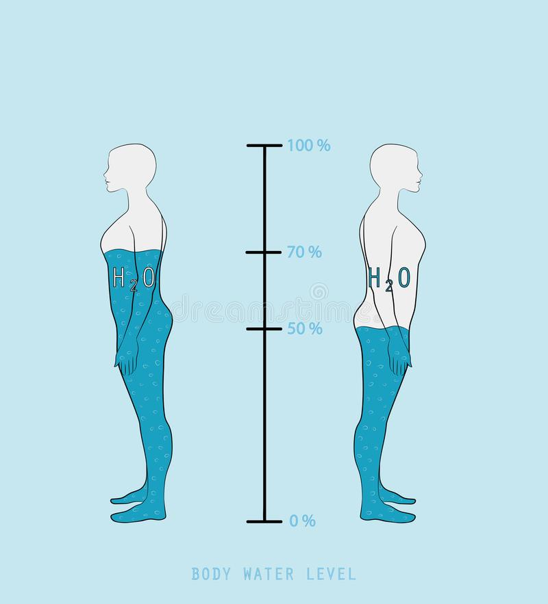 Woman silhouette infographic showing water percentage level in human body vector illustration stock illustration