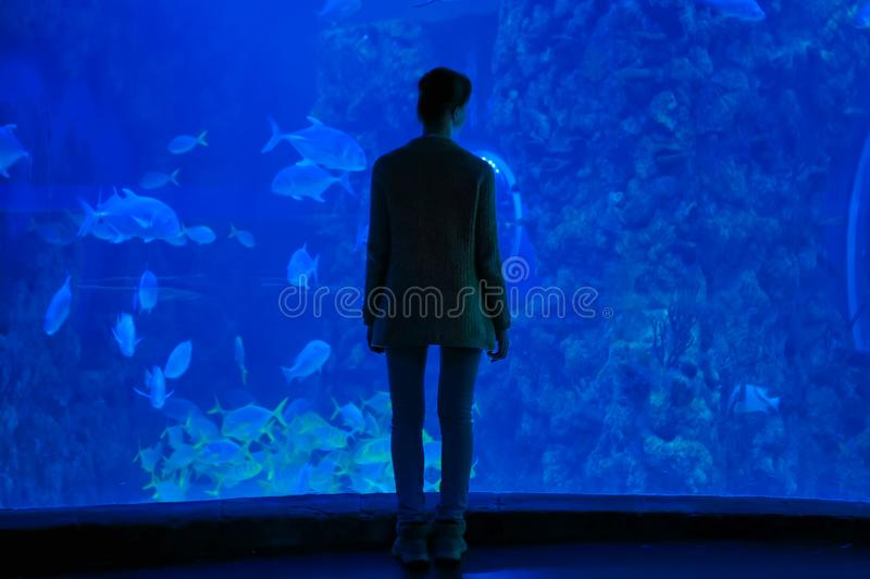 Woman silhouette looking at fish in large public aquarium tank royalty free stock images