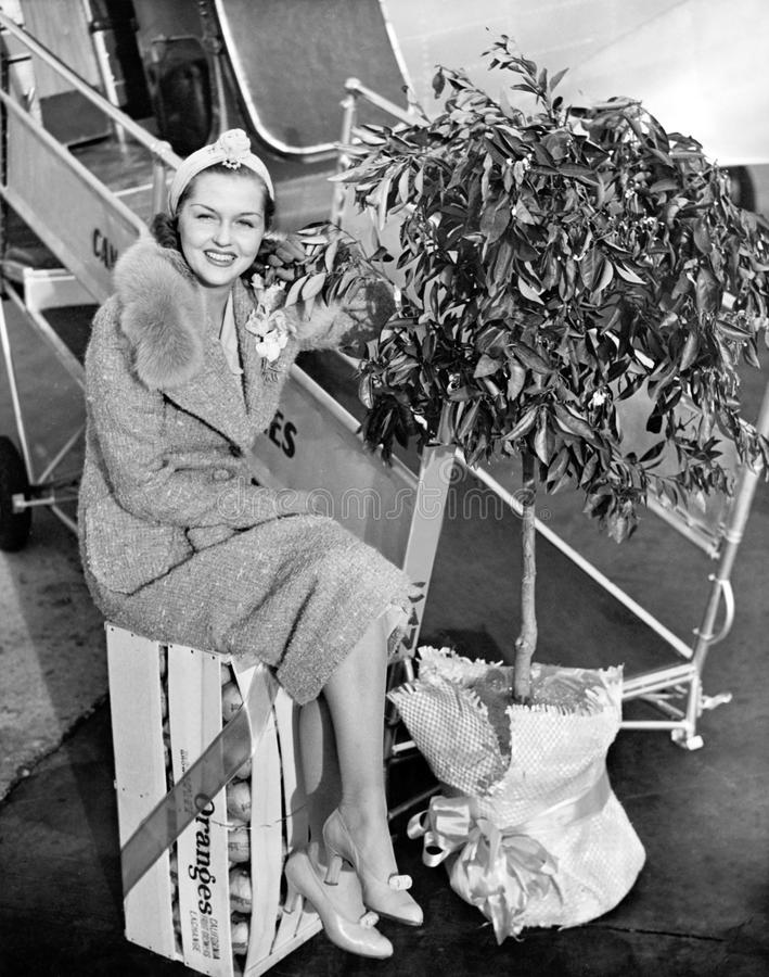 Woman sitting on a crate of oranges next to a plane and citrus tree royalty free stock image