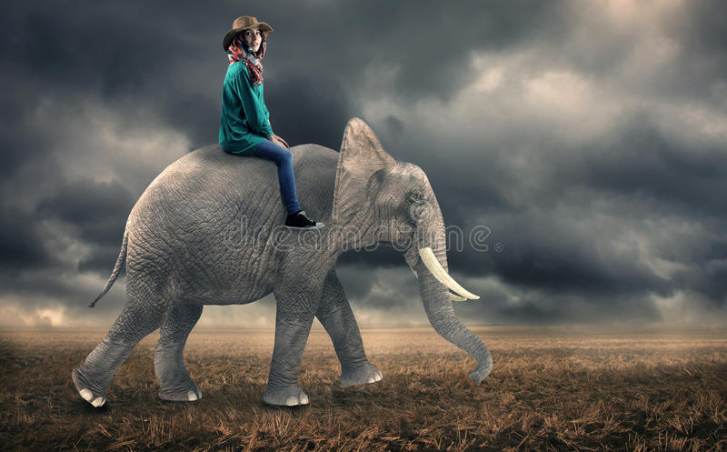 Woman sitting on an elephant royalty free stock photography
