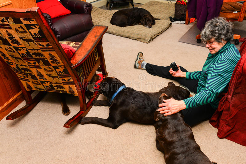 Woman sitting on floor with four dogs stock photos