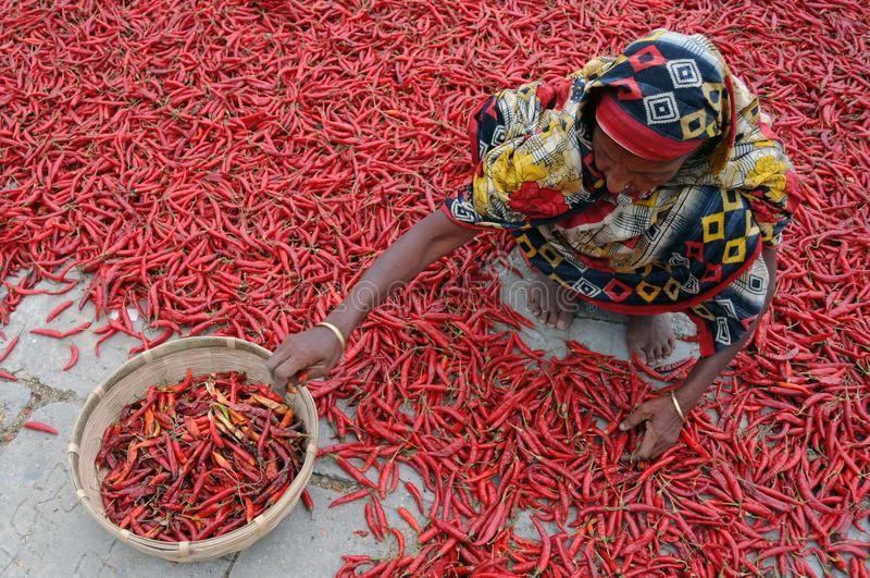 Woman Sitting on Floor of Red Chili stock image