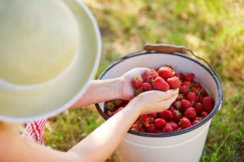 Woman sitting next to a bucket full of fresh strawberries stock image
