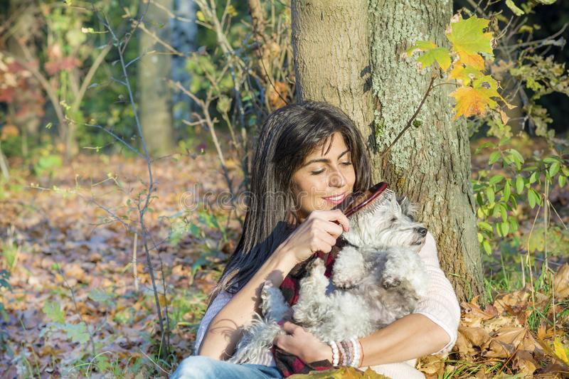 Dog being groomed with hair brush by young woman in the park. Woman sitting in a park and grooming a dog purebreed maltese stock photography