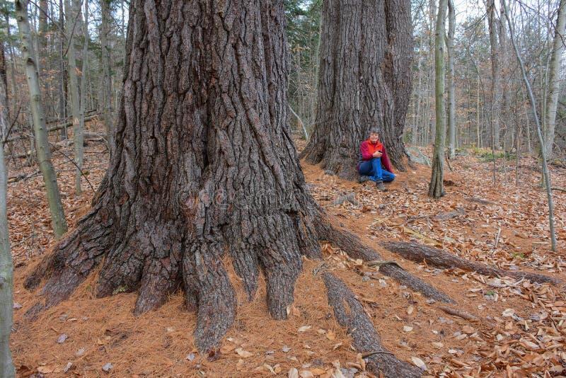 Woman sitting under giant white pine trees stock photo