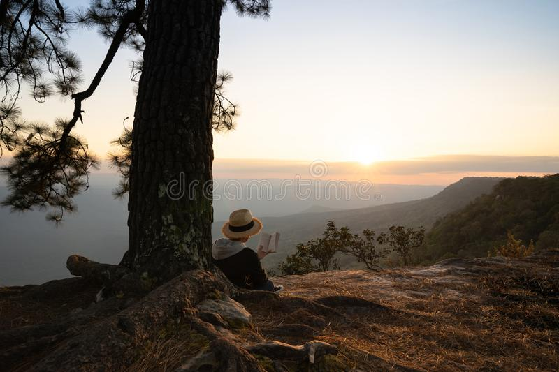 Woman sitting under pine tree reading book stock photography