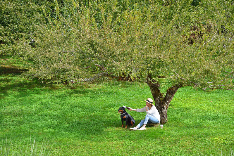 Woman sitting under a tree in the park royalty free stock photo