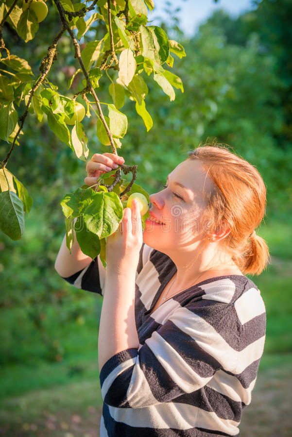 Woman smelling apples stock photos