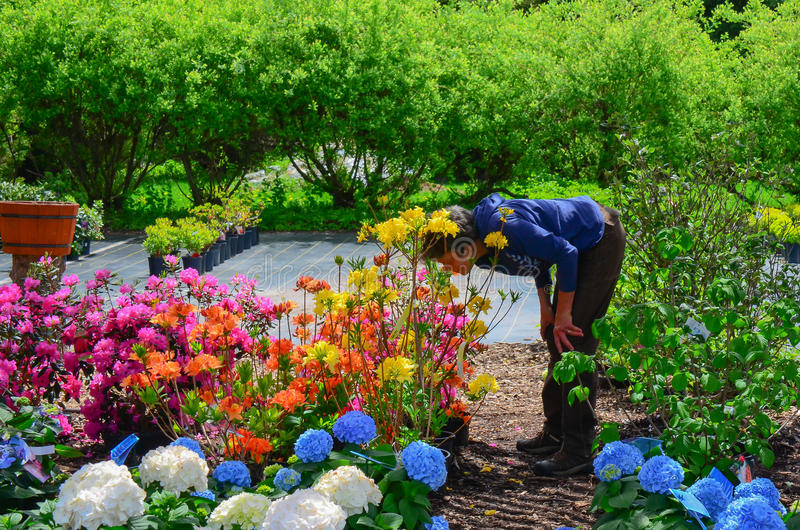 Woman smelling the flowers at garden center stock images