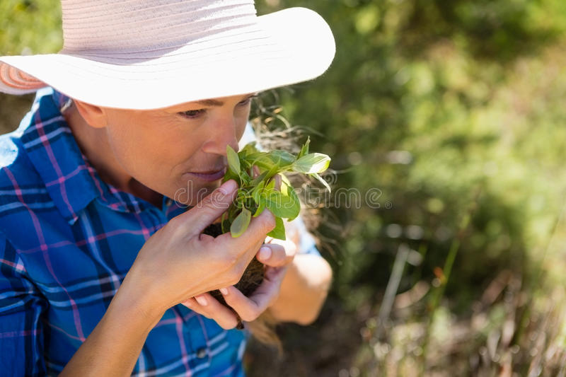 Woman smelling sapling in garden. On a sunny day royalty free stock image