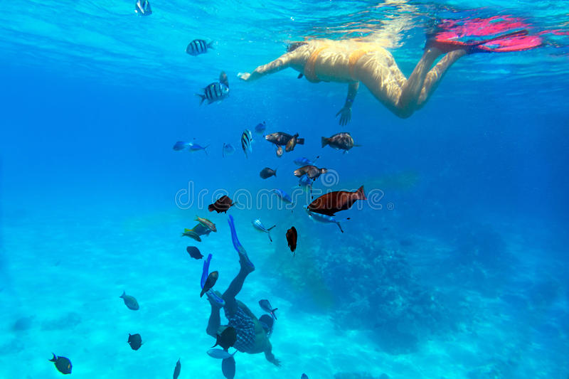 Download Woman Snorkeling In Red Sea Stock Photo - Image: 30574822