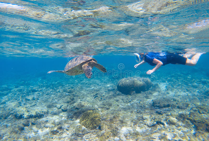 Woman snorkeling with sea turtle. Turtle and snorkel underwater. stock photos