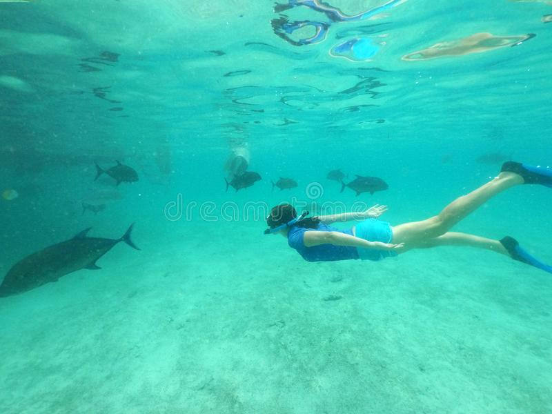 Woman snorkelling with giant trevally fish in Rarotonga Cook Isl. Woman snorkelling with giant trevally fish in Rarotonga, Cook Islands. Real people. Copy space stock photo