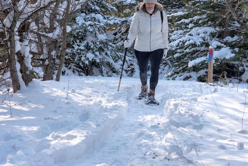 woman snowshoeing along snowy forest trail royalty free stock image