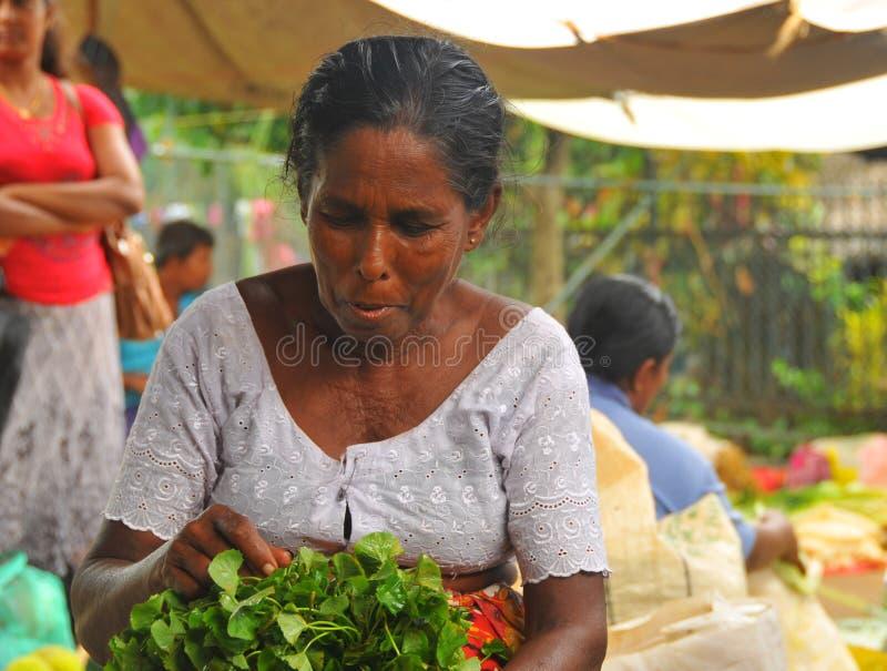 Woman sorting salad - Tangalla (Sri Lanka, Asia) royalty free stock photos