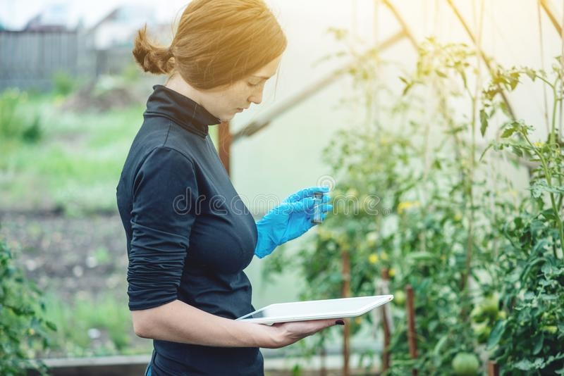 Woman specialist agronomist holding a tablet. Quality control of production on farms. Woman specialist agronomist holding a tablet. Concept quality control of stock photography