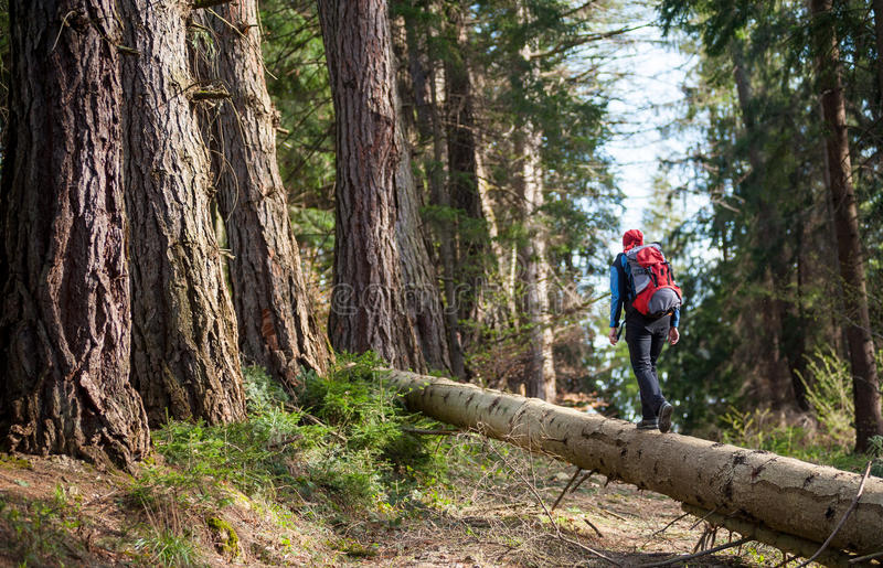 Woman in sportswear with a red backpack. From back walking on a log in the forest. Outdoors activities royalty free stock image