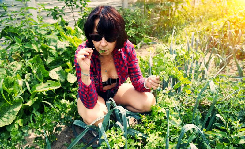 Woman in the garden eats parsley. stock photo