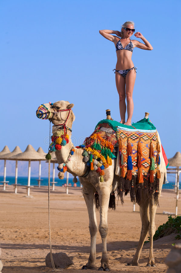 Woman Standing on a Camel on a ocean background. A young woman stands on a camel on the beach near the sea stock photos