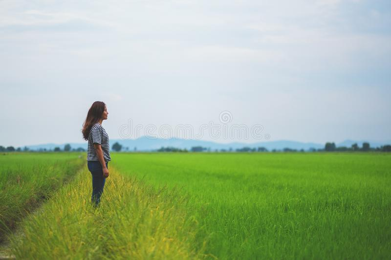 A woman looking at a beautiful rice field stock photo