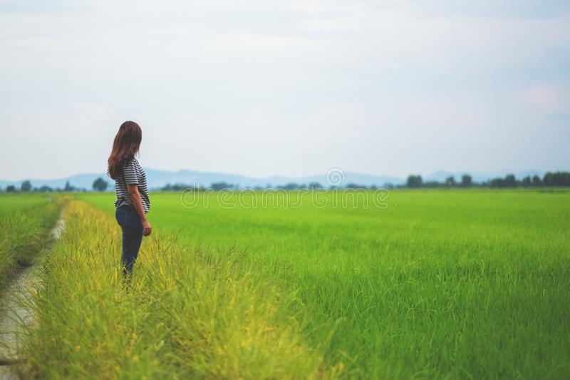 A woman looking at a beautiful rice field royalty free stock image